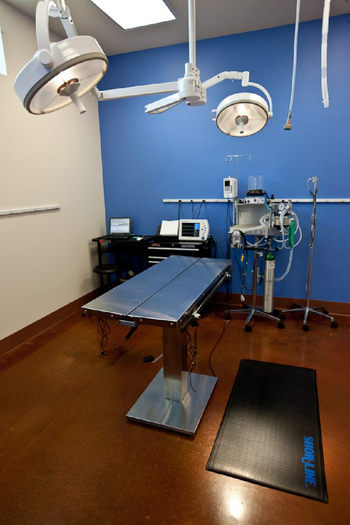 Animal Hospital Design in Arizona